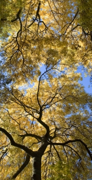 Autumn Dandenongs III